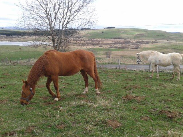 Les deux chevaux de Camille D