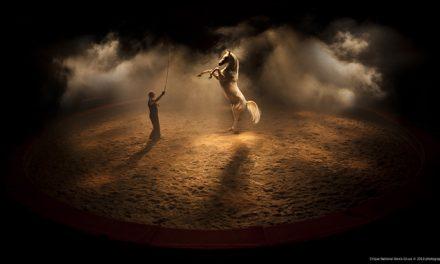 Cirque et équitation ou pourquoi pousser les portes d'un cirque?