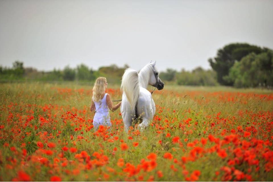 L'abécédaire de Jennifer Dhombre : Kalliste Arabians