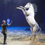 Un moment privilégié au Cirque Alexis Gruss