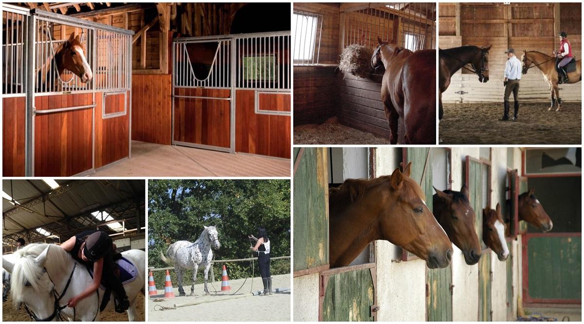 Comment bien choisir son centre équestre ou son poney club ?