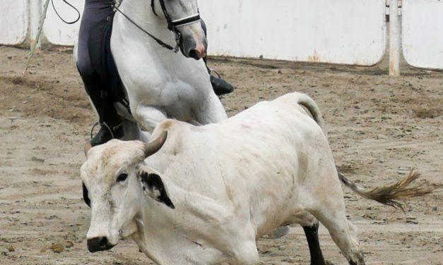 J'ai découvert la «Working Equitation» !