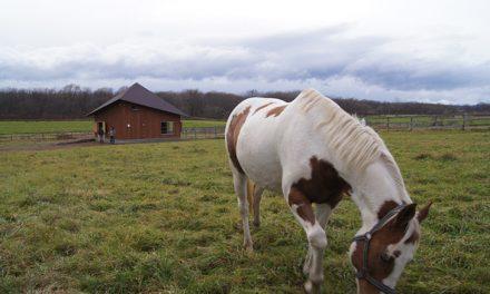Interview de Gaia Nova : avoir ses chevaux chez soi, soins et beaucoup d'autres questions !