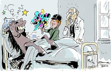 Les 5 maladies principales du cheval