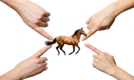 Droits et Devoirs du vendeur et de l'acheteur d'un cheval : faites un contrat !