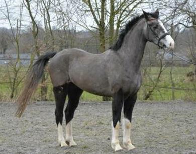 Un cheval à l'essai