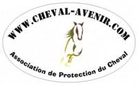 L'adoption grâce à Cheval-Avenir : Retour d'expérience