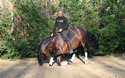Stage de Dressage et d'Art Equestre chez Fiona et James Carter à Fleurines (60)