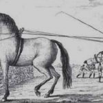 Histoire des Longues Rênes