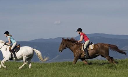 Cavalier(e) ou homme/femme de cheval ?