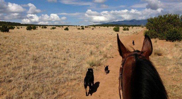 Les cow-girls bienfaitrices des chevaux du Nouveau-Mexique