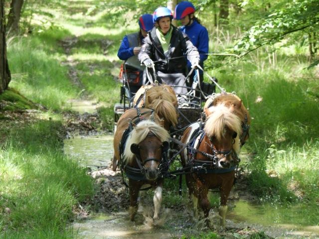 Mes 4 poneys lors d'un Parcours d'Orientation et de Régularité en forêt de Tronçais
