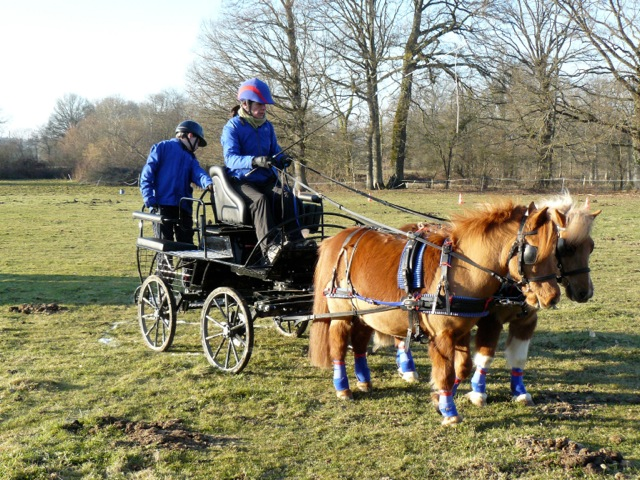 attelage solo poney A (avec mon vieux Ernest) lors d'un POR avec une voiture pas du tout pratique pour le TREC !