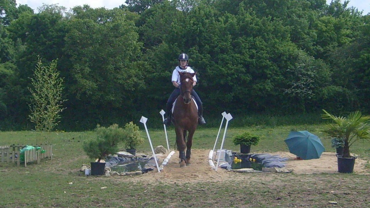 Le cheval de TREC
