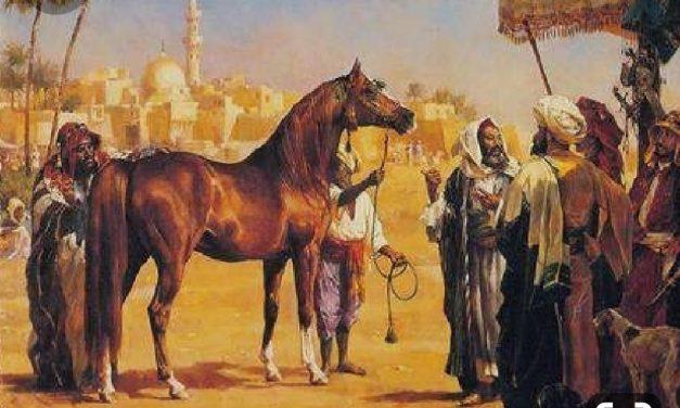 Voyage dans le temps du Cheval Arabe