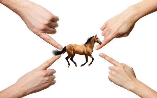 6 mythes sur l'alimentation du cheval